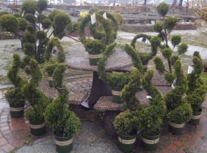 Small topiaries