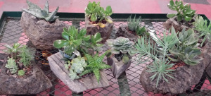 Feather Rock Planters