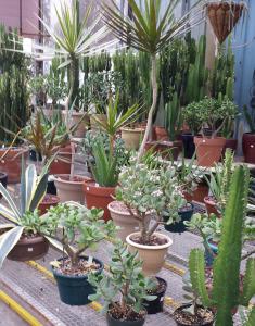 Lg Succulents