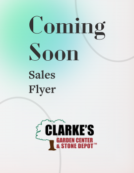 Clarkes sales flyer coming soon